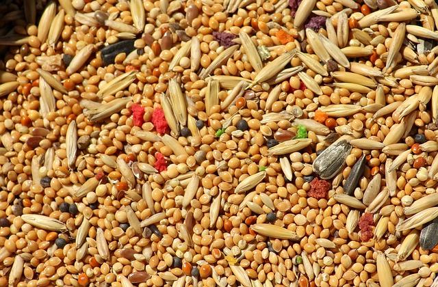 Tout ce que vous devez savoir sur le millet germé